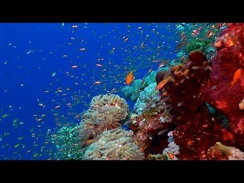 Abu Dabab - Aquarium, Giant Turtle, Marsa Alam, Abu Dabbab (Marsa Alam),Ägypten
