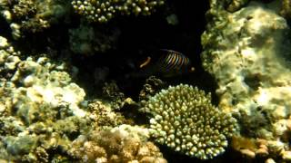 preview picture of video 'Red Sea Coral Reef - Rabigh - Kingdom of Saudi Arabia'