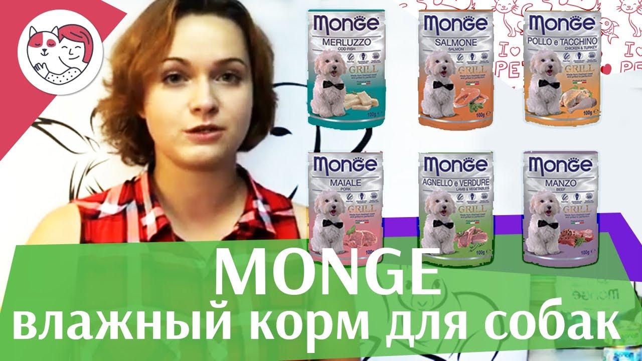 Monge паучи для собак на ilikepet