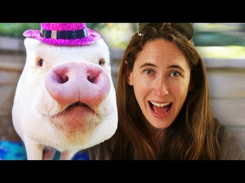I Raised A Pig For A Day