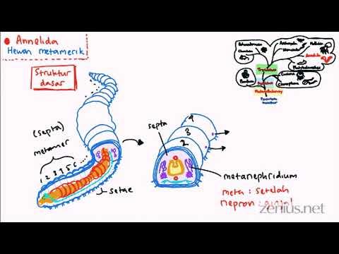 ASD tisztítható a paraziták
