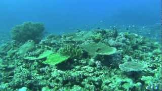 preview picture of video 'Fiji dive 3rd July 2012 : フィジーダイビングトリップ 2012年7月3日'