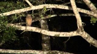 Borneo Jungle Camping - Dag 1