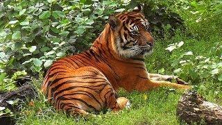 Смотреть онлайн Что интересного можно увидеть в зоопарке