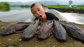 Cá Mặt Quỷ Hấp Xả - Loài Cá Vứt Bỏ Không Ai Thèm Nhặt