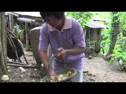 ชาสมุนไพรจากศัตรูพืชสุขภาพไซบีเรีย