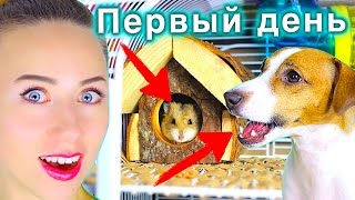 ХОМЯЧОК - РЕАКЦИЯ СОБАКИ   ПЕРВЫЙ ДЕНЬ У МЕНЯ ДОМА ХОМЯК   Elli Di Pets