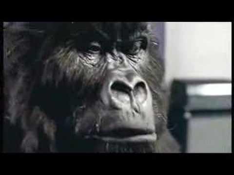 Cadbury - Drumming Gorilla