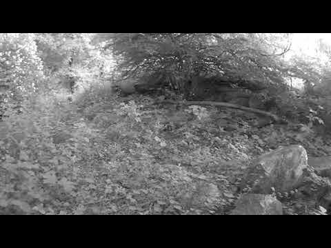 Video Bobcats in Westchester NY