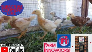 Better results from the Farm Innovators #4250