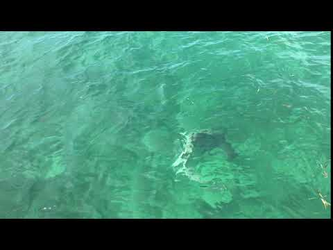 Florida Keys Tarpon Wrangler