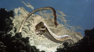 Морские динозавры. Документальные фильмы. National Geographic Channel TV.