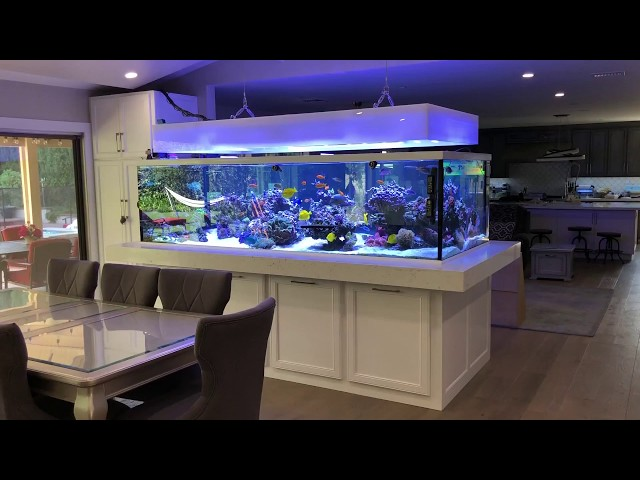 675 gallon Rainbow Reef tour