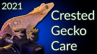 Crested Gecko Care Guide 2021   EVERYTHING You Need To Know