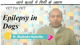 Epilepsy in Dogs  In Depth ||VET For PET||