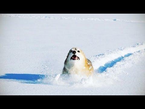 Řádění ve sněhu