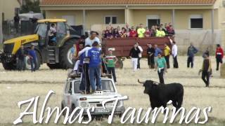 preview picture of video 'encierro por el campo Horche 12 10 2012'