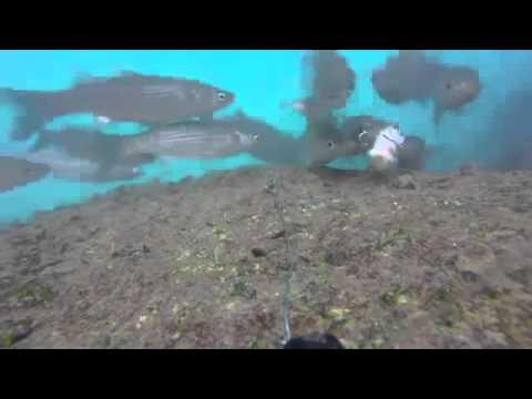 La pesca su uvilda del 2017