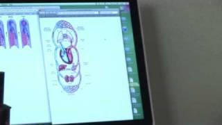 Circulatory System - Veins