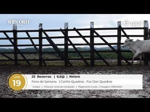 25 BEZERRAS NELORE