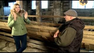 Смотреть онлайн Отзывы владельца о куйбышевской породе овец