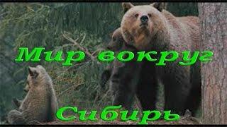 Природа и животные Сибири