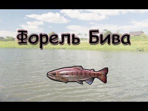 Русская Рыбалка 3.99 (Russian Fishing) Форель Бива