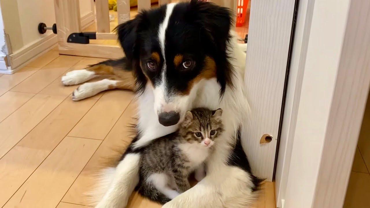 【ずっと一緒】甘えん坊の子猫を子守する犬