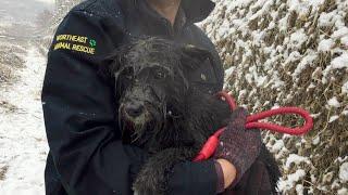 Weak homeless dog wandering in urban river rescued in heavy snow