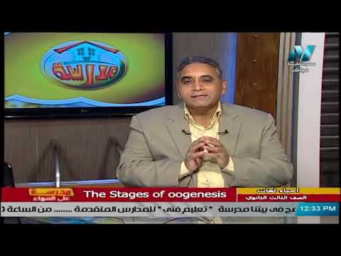 أحياء لغات للصف الثالث الثانوي 2021 - الحلقة 21 - the stages of oogenesis
