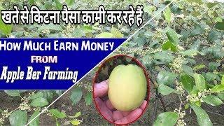 How Much Earn From Apple Ber Farming | Apple Ber Farming Sa Ketna Paisa Kama Saktaho ???