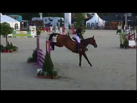 7yo gelding shown 1.10m amazing breeding