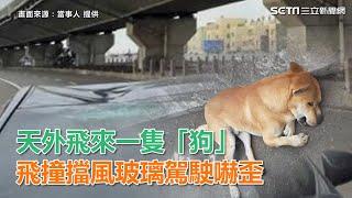 天外飛來一隻「狗」 飛撞擋風玻璃駕駛嚇歪|三立新聞網SETN.com