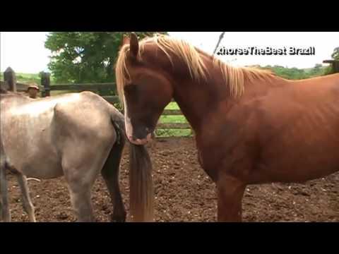 Wild Animal Mating Metal of Horses mating