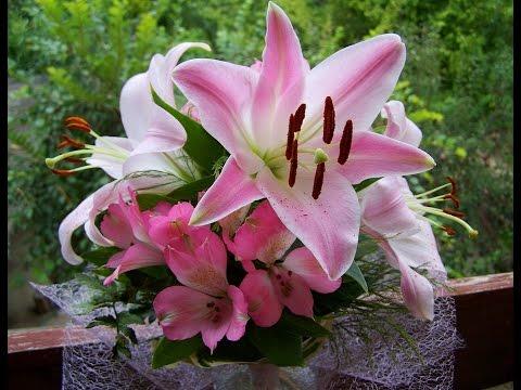 Video MENAKJUBKAN!! 20 Manfaat dan Khasiat Bunga Lily Pink untuk Kesehatan