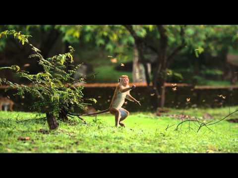 Disneynature Monkey Kingdom - Trailer