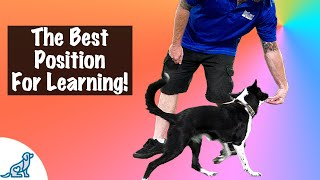 How To Teach Your Dog To Sit Beside You - Professional Dog Training Tips!