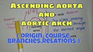 Ascending aorta and aortic arch   origin,course,branches,relations   Simplified anatomy💯✔️