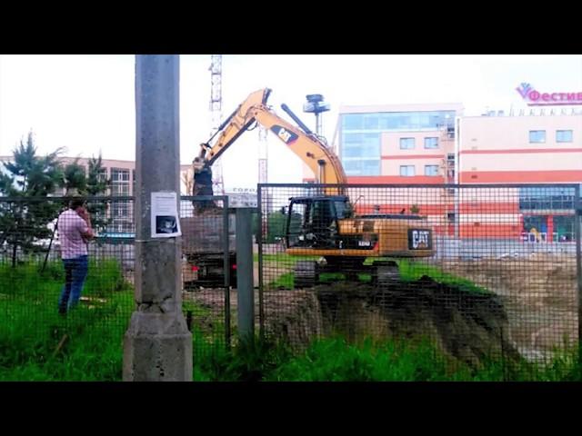 В Ангарске исчезают сосны