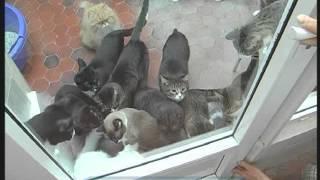 Галилео. Театр кошек