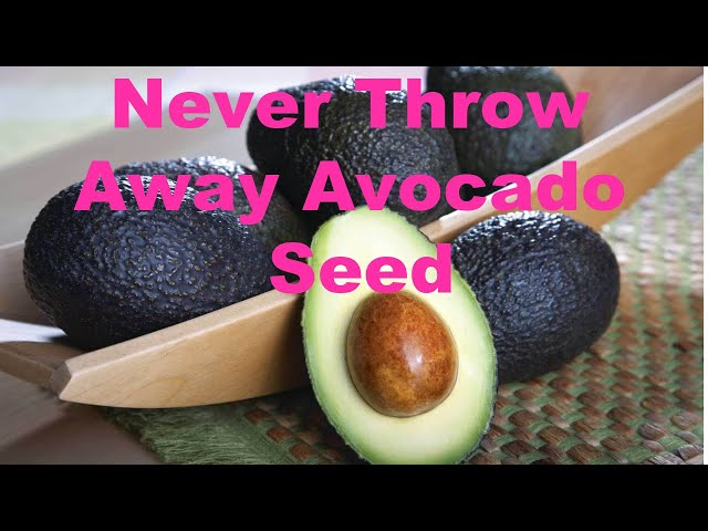 Avocado Seed Anti Aging Antioxidants Packed