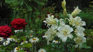 Райский сад Валентины Проценко. Музыка для души. Flowers. Very beautiful music.