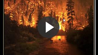 10 facts about wildfires | knowledge quiz about wildfires