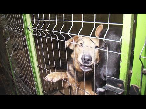 «Животные – не вещи» изменить закон о жестоком обращении с животными предложили сегодня в Череповце