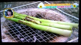 今日感テレビ、くまモンとゴリけんのカレ―作りだモン2