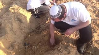 как растет картошка в Израиле!!!
