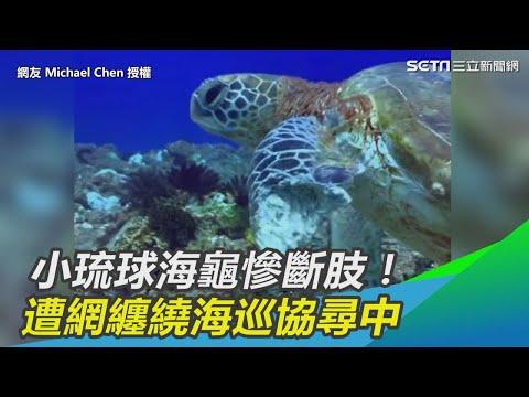海龜被網子纏繞,左肢被截肢,然而被人找到卻不能把他救上岸只能拍攝,事後海巡開搜