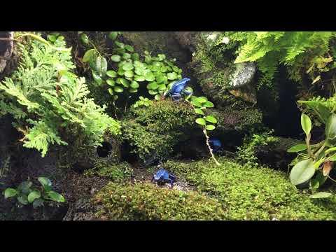 Moss terrarium with poison dart frogs