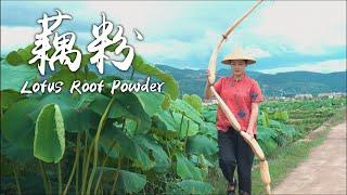 "莲藕的成熟季节大多在8月份,云南的第一批藕已经成熟啦,云贵高原充足的日照环境下种出来的藕,脆脆甜甜的,去田里挖了几个回来,搞几道当地的小菜尝个鲜,仿佛吃到了夏天阳光的味道!  ※Click ""cc"" on the lower right menu to choose your subtitle language.  Lotus roots usually harvest in August. However in Yunnan, the first lotus roots can be harvested already. They are crispy and sweet. So I made several local dishes with them. Thanks to the great natural environment of Yunnan, you can taste the summer sunshine even in the lotus roots.  大家好!我是滇西小哥,一个地道的云南妹子,如果你喜欢我的视频,请持续关注我的频道, 我会在不同的平台分享我的生活,以及云南特色美食,祝你们天天开心,每天都有美食相伴~ YouTube【滇西小哥 Dianxi Xiaoge】▶️https://bit.ly/2MH1T5N Facebook【滇西小哥 Dianxi Xiaoge】 ▶️https://bit.ly/2TsGflr Instagram【dianxixiaoge_apenjie】▶️https://bit.ly/2Wagkze  Music Production▶@Sam Lin Music   #滇西小哥 #DianxiXiaoge #ĐiềnTâyTiểuCa"