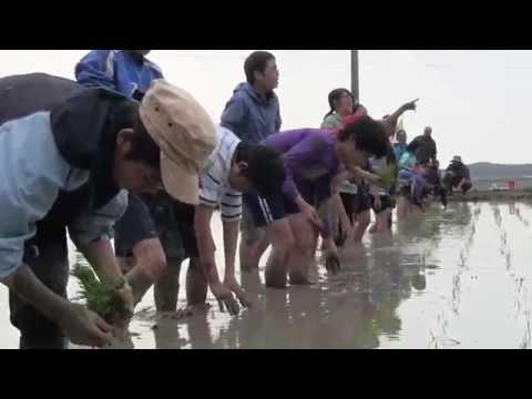 種子島の学校活動:茎南小学校もち米田植え体験!